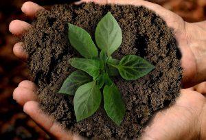 earth growth