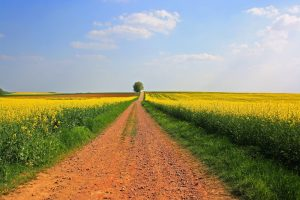 field path